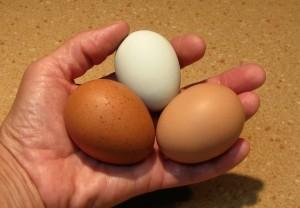 Fox Trot Farm Eggs