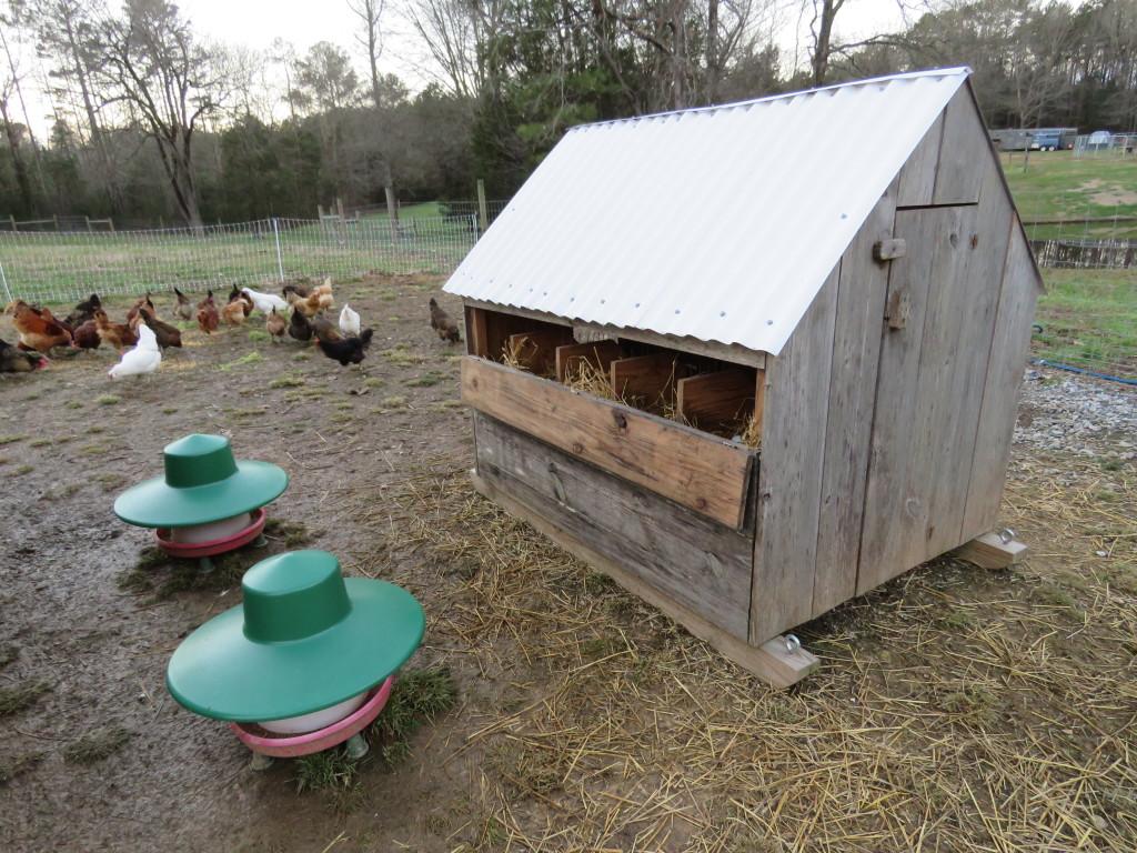 Hens, Feeders, Nesting House