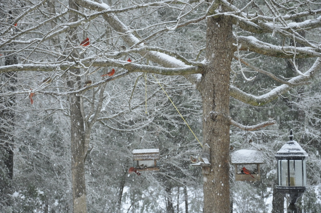 Cardinals Big Snow 2014