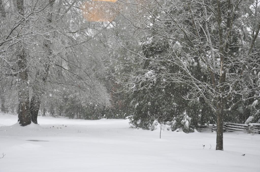 Big Snow 2014