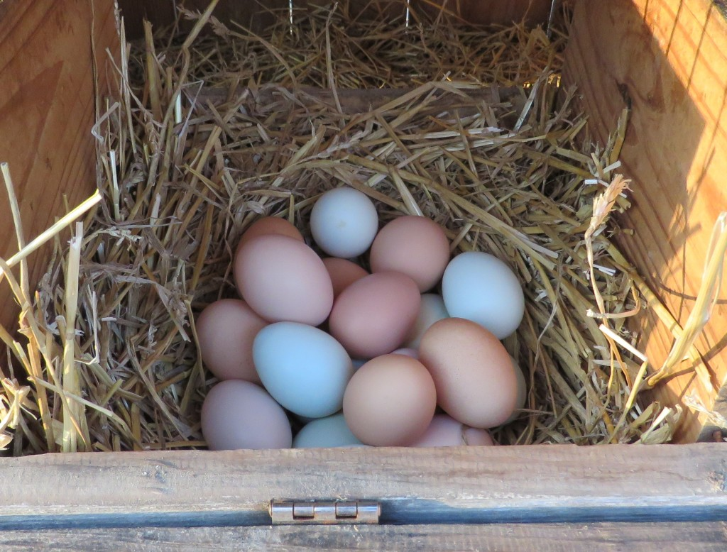 Fox Trot Farm Eggs