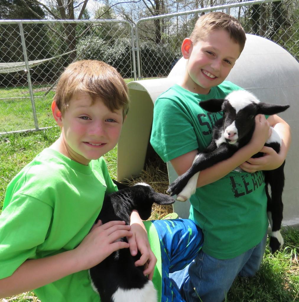 Boys Lambs