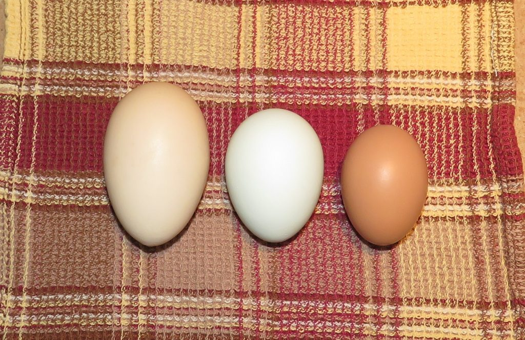 three-eggs