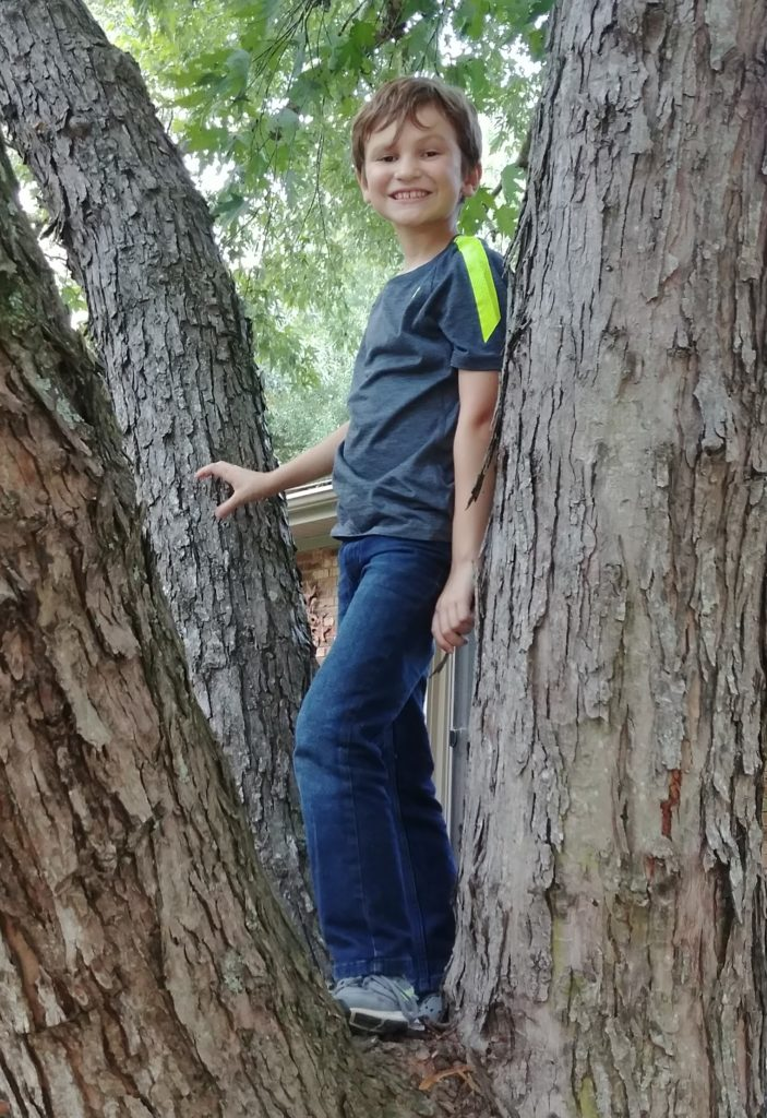 Eli was happy to be in the maple tree