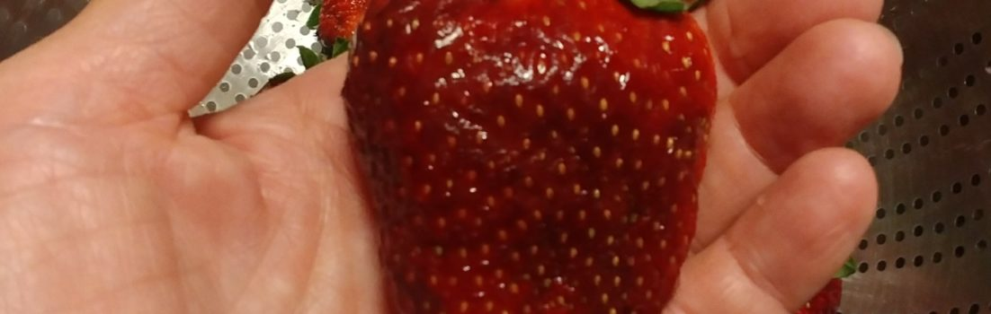 strawberry from the ivy place