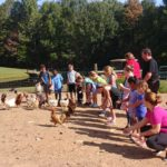 children feeding chickens on fox trot farm