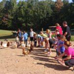 children feeding chickens on fox trot farm