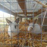 New Rabbits on Fox Trot Farm