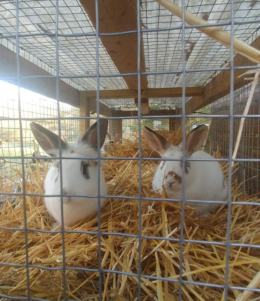 New Rabbits on Fox Trot Farm